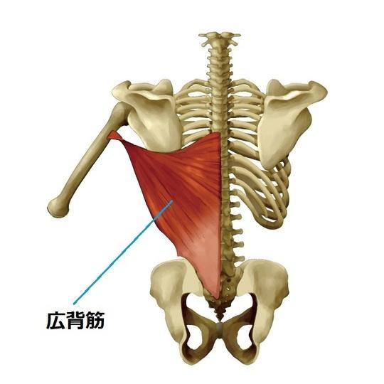 痛み 広背筋 広背筋が筋肉痛になったときの対処法5選!痛みの緩和や予防法も解説